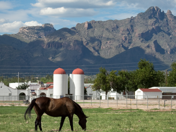 Horse in pasture with white farm buildings and mountains in background