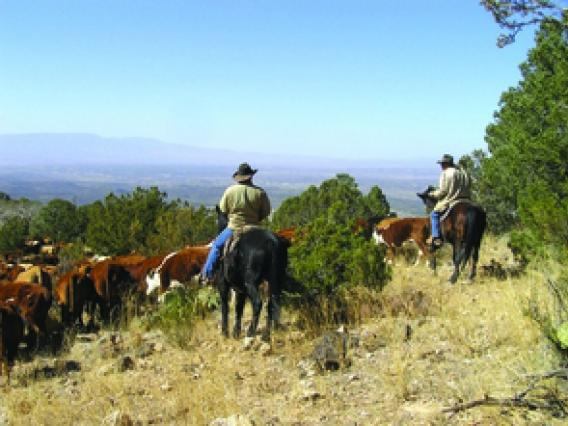Ranchers on horseback on wooded range