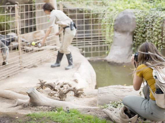 Photographer filming zookeeper working with giant anteater.